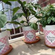 Photo of Kilwins Ice Cream tubs filled with plants