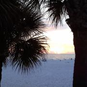 Photo of palm trees, beach, and ocean at sunset