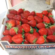 Photo of carton of strawberries