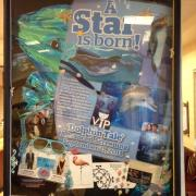 "Photo of shadow box collage about ""Dolphin Tale"" movie"