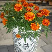 Picture of flowers in a Kilwins Ice Cream tub